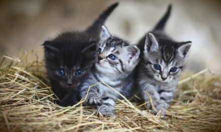 Brucia il gattile comunale: strage di gatti, morti oltre 100