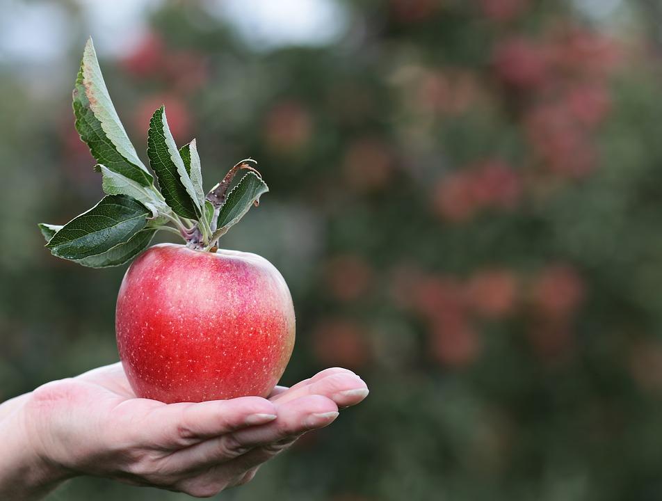 Annurca Fest. A Napolilagrande manifestazione dedicata alla mela annurca