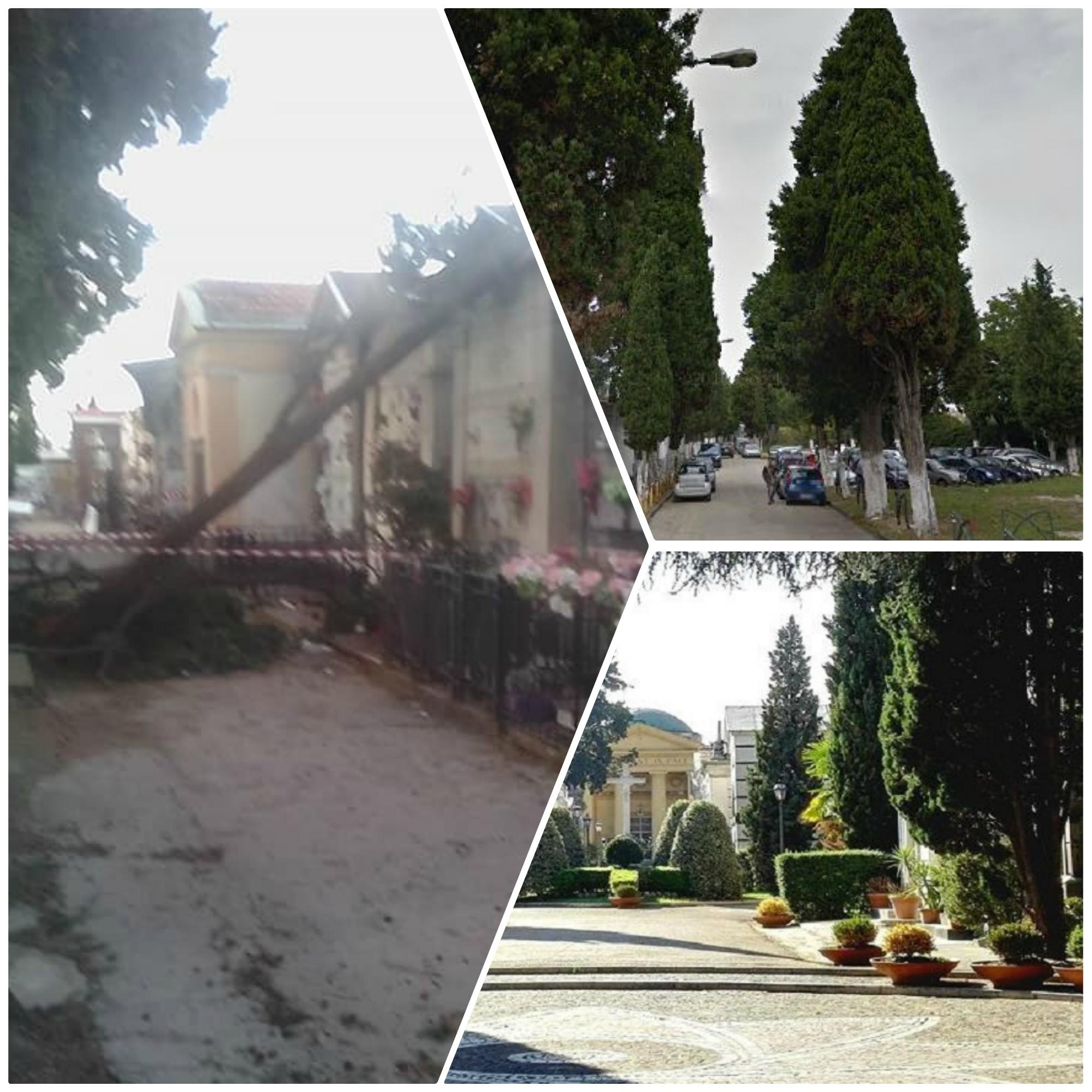Torna il maltempo in Campania. I cipressi del cimitero di Afragola sono sicuri?