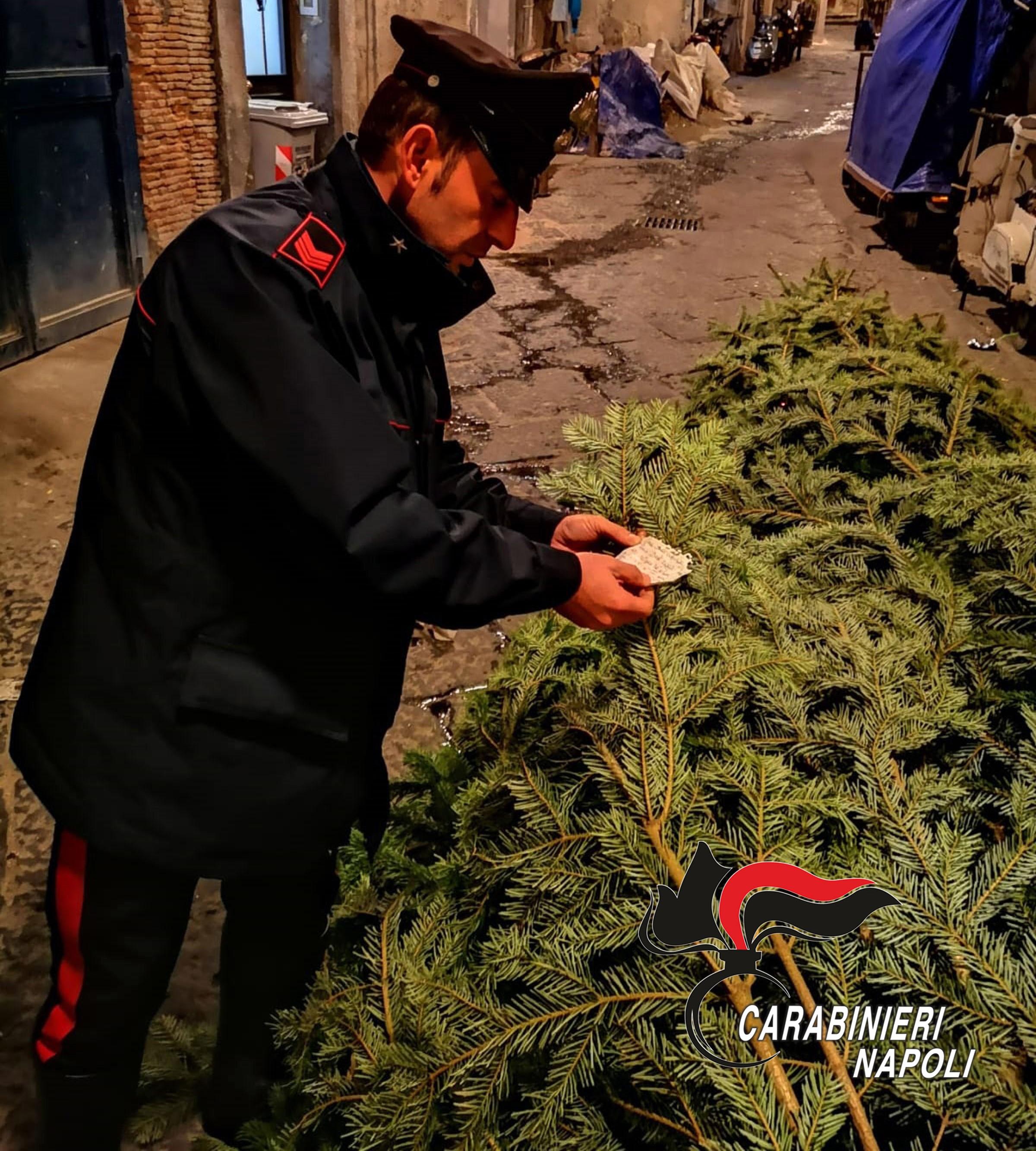 L'albero della Galleria Umberto di Napoli rubato e preso di mira dai vandali: ritrovato dai carabinieri