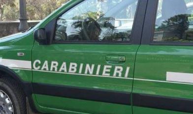 I Carabinieri negli ospedali per incontrare i bambini ricoverati per la Befana della Biodiversità