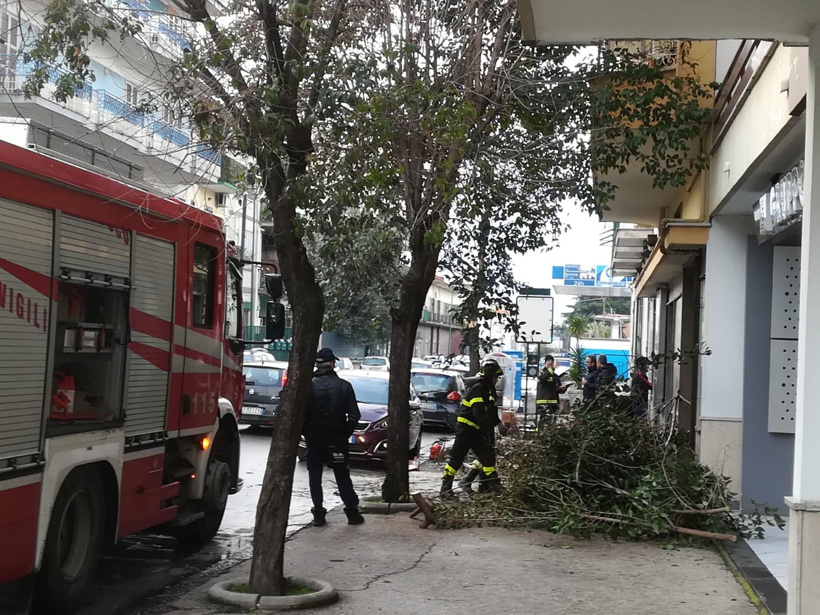 Afragola, forte vento fa cadere alberi in strada. Vigili del fuoco in azione