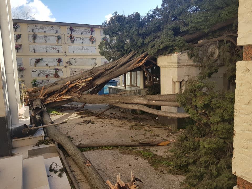 Forte vento a Napoli: diversi alberi crollati al cimitero di Secondigliano