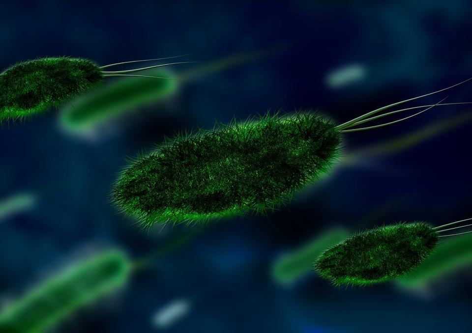 Batteri, virus e parassiti causano oltre 600 milioni di malati ogni anno