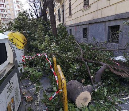 Napoli. Forte vento al Vomero: è strage di alberi
