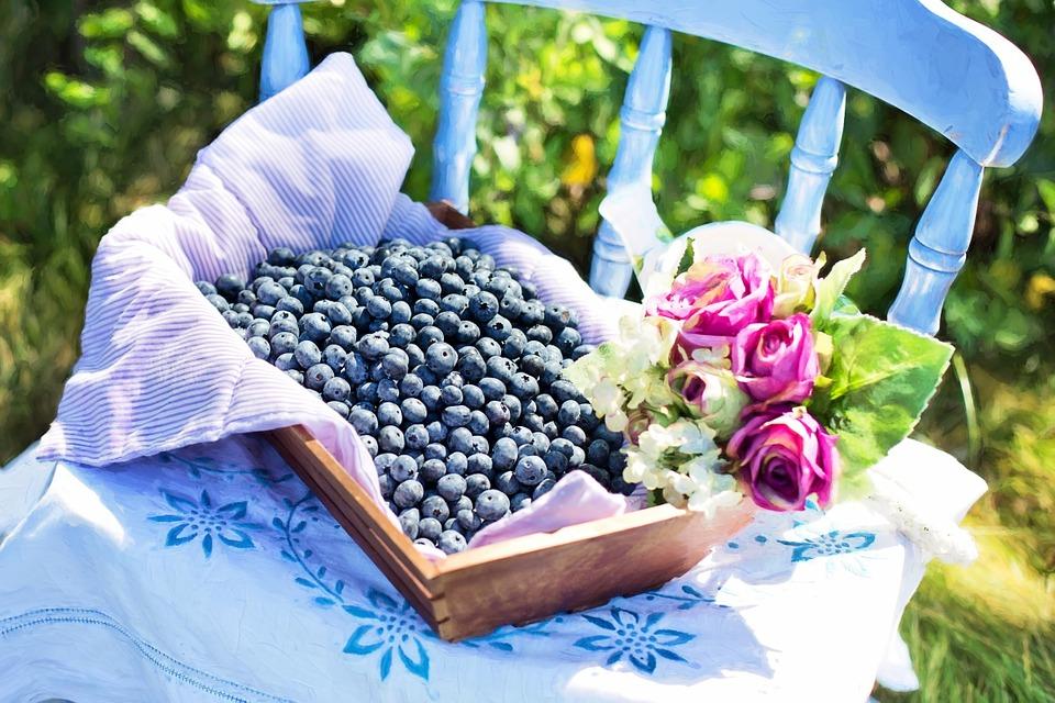 Il mirtillo Salvaossa: frutti piccoli dalle straordinarie virtù