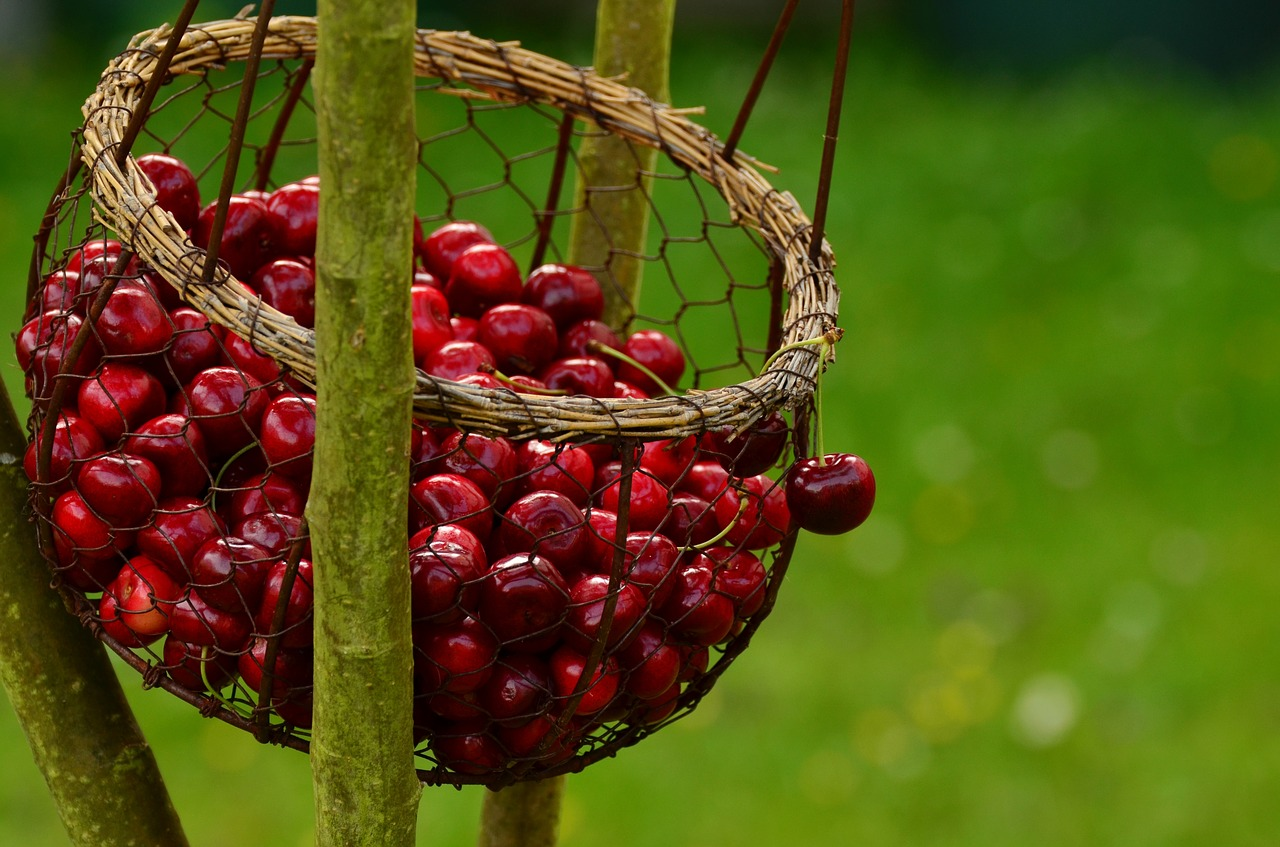 Una tira l'altra: vi spieghiamo le proprietà delle ciliegie