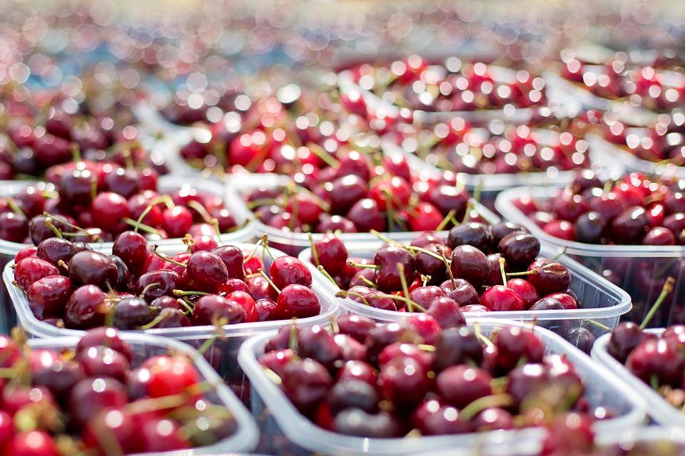 Festa della ciliegia a Chiaiano con l'impegno di tanti giovani del territorio