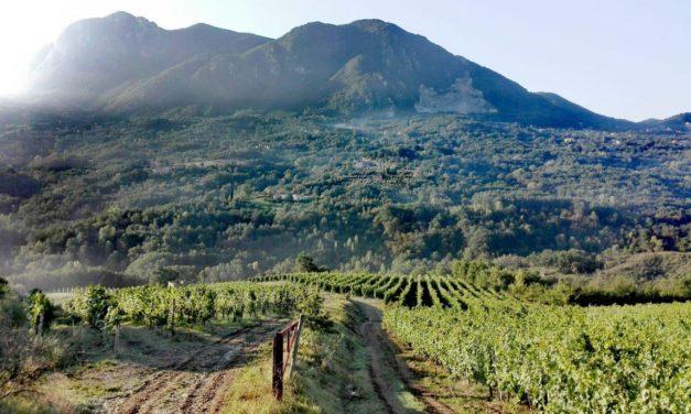 Vendemmia e trekking a Lapio nella patria del Fiano di Avellino