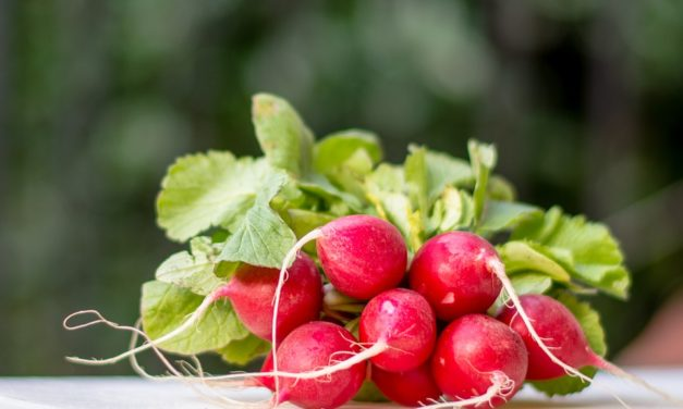 Gli amici della dieta puoi coltivarli sul balcone: i ravanelli