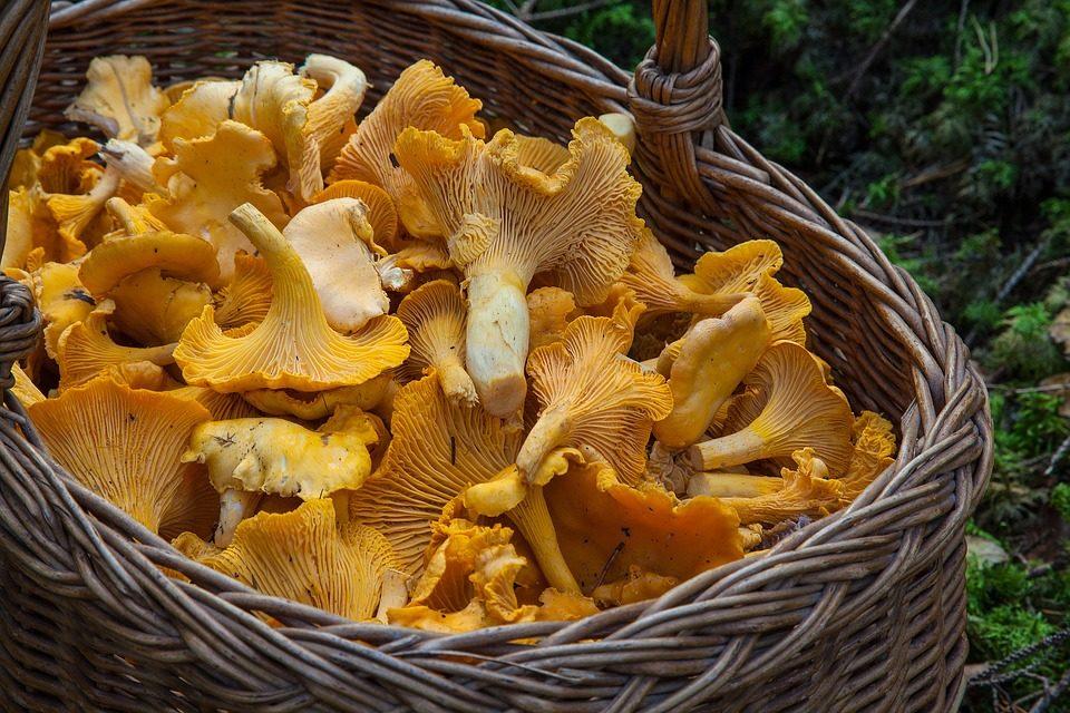 Tanto gusto e poche calorie: i funghi!
