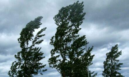 Maltempo in Campania: forte vento, alberi crollati a Licola