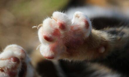 Caserta. Gatto ucciso a colpi di pistola: caccia al responsabile