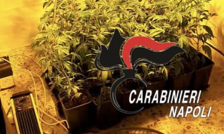 Napoli. Coltivava marijuana in casa, 36enne arrestato dai carabinieri