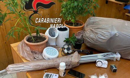 Scoperta una serra artigianale con piante di cannabis in casa: 25enne arrestato dai carabinieri a Qualiano