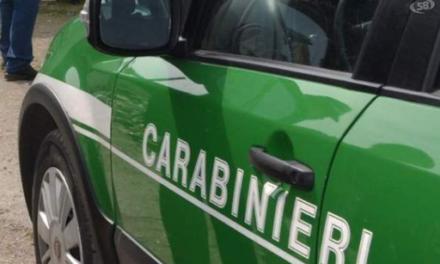 Sant'Antonio Abate: sequestrata dai carabinieri forestali un'area agricola usata come parcheggio per i camion di rifiuti